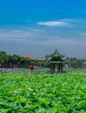 湛江市吳陽鎮蛤嶺村即將舉辦2019年第三屆蛤