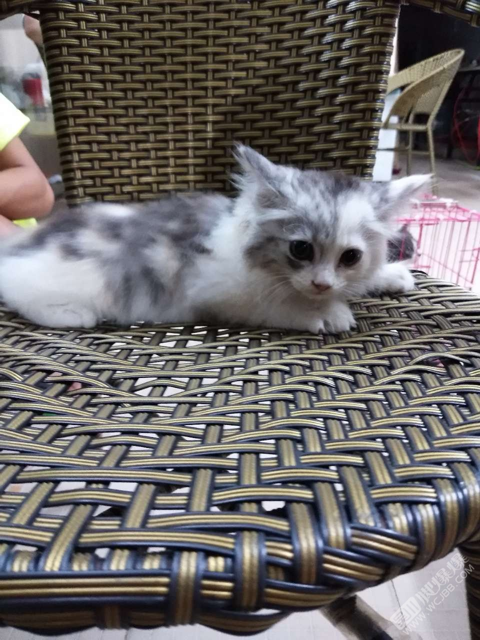 猫猫壁纸酷唯美手绘