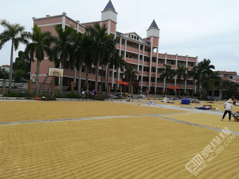 吴川黄坡嘉豪城市花园旁环境优美的大岸学校,由于放暑假,学校操场正好成了村民收获季.jpg
