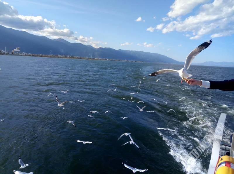 看我抓拍的完美海鸥,天蓝得让人忘记烦恼!