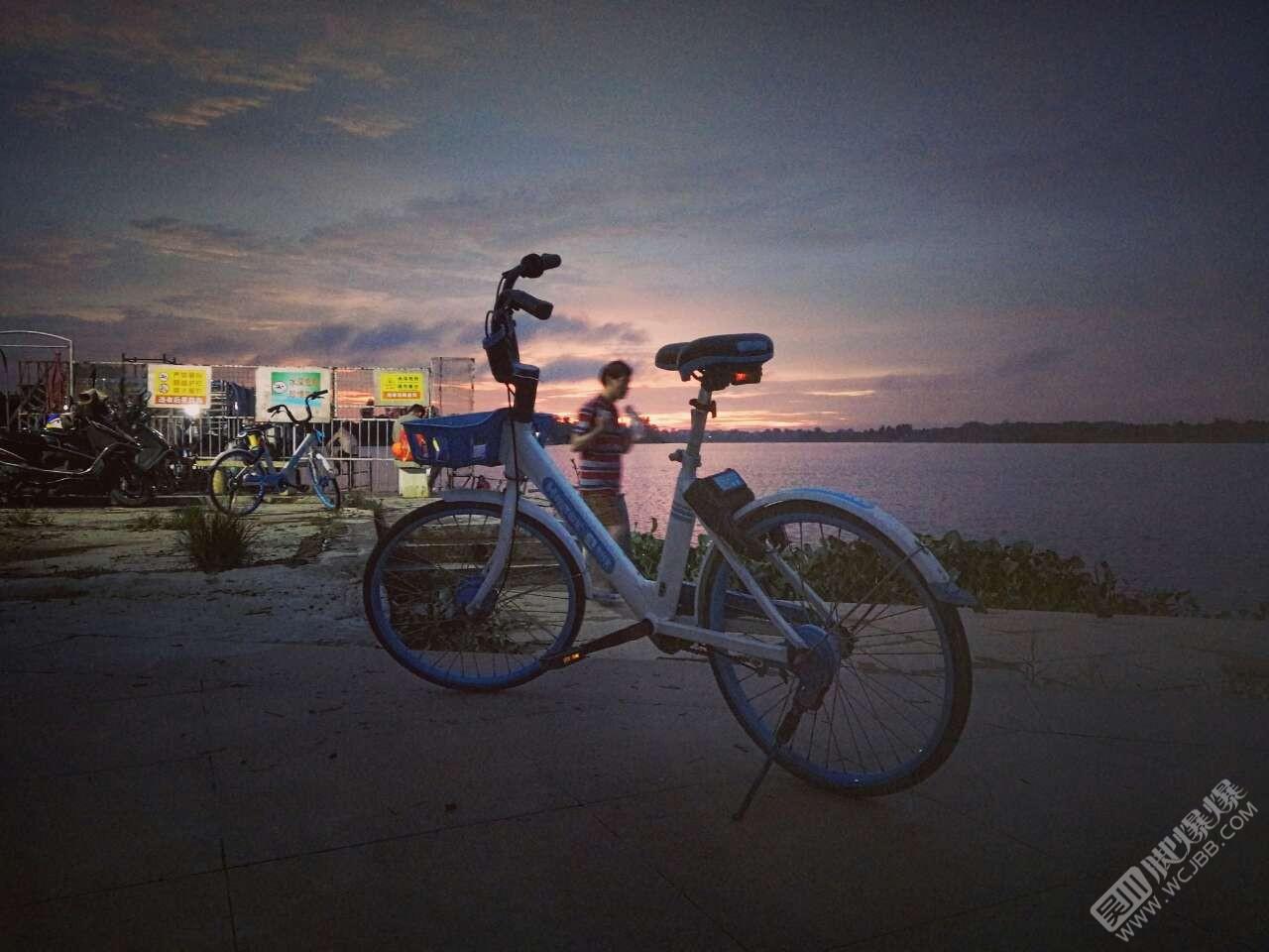 江心島的夜景