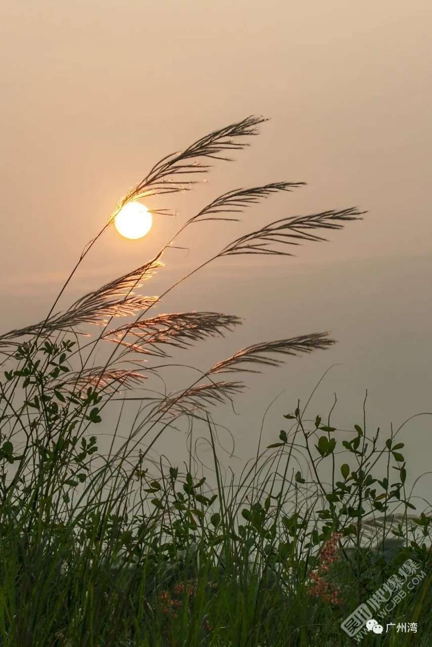 贊頌吳川文化——廣東湛江市坡頭區龍頭高嶺的詩詞