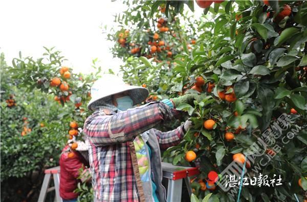 覃巴鎮:走特色農業品牌路,全面推進鄉村振興