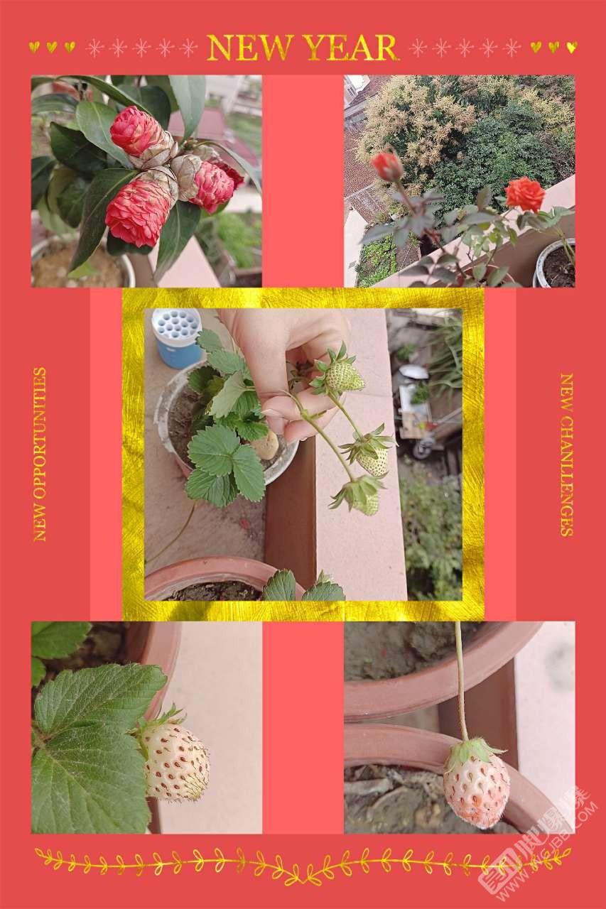 送你一朵小红花。。。送你一颗小草莓。