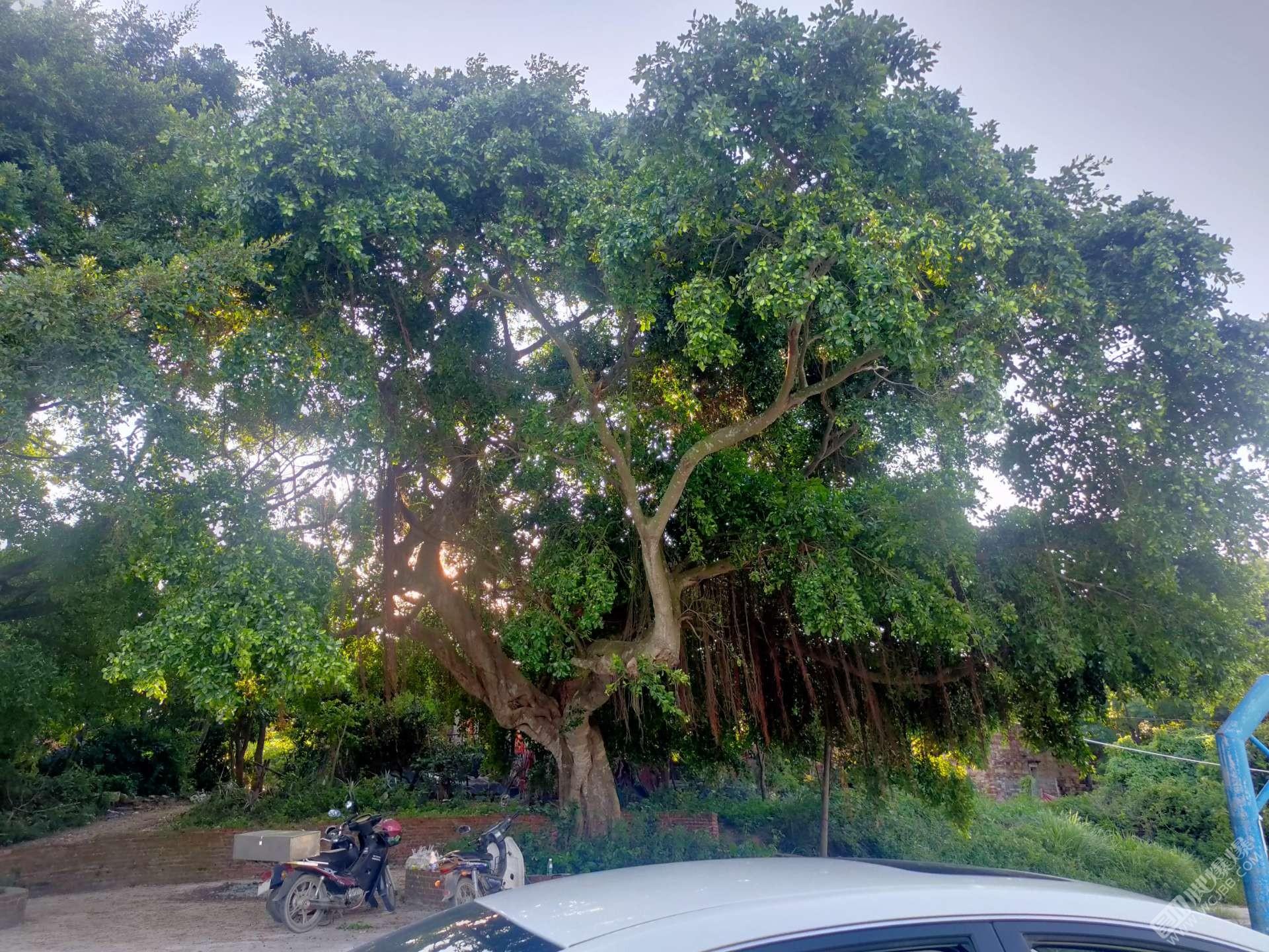 大树有少少年代感了